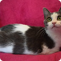Adopt A Pet :: JACKIE - Winterville, NC