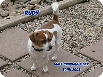 Chihuahua Mix Dog for adoption in Huddleston, Virginia - Rudy