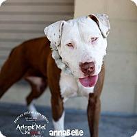 Adopt A Pet :: Annabelle - tucson, AZ