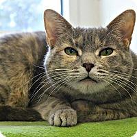 Adopt A Pet :: Maya - Dunkirk, NY