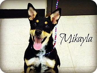 Australian Cattle Dog Mix Dog for adoption in Defiance, Ohio - Mikayla