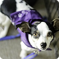 Adopt A Pet :: Bitsy - Weatherford, TX