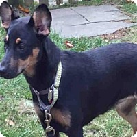 Black and Tan Coonhound Mix Dog for adoption in Brewster, Massachusetts - TORI