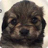 Adopt A Pet :: Zeke - La Costa, CA