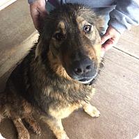 Adopt A Pet :: Bear - Vancouver, WA