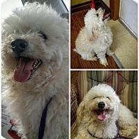Adopt A Pet :: Smitty - Spartanburg, SC