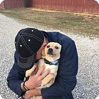 Adopt A Pet :: Prince - Allentown, PA