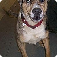 Adopt A Pet :: Boomer - Bristol, TN