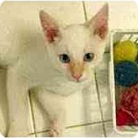 Adopt A Pet :: Gatsby - Arlington, VA