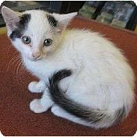 Adopt A Pet :: Mick - Los Alamitos, CA