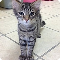 Adopt A Pet :: Jacinta - Byron Center, MI