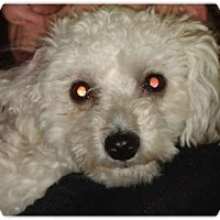 Adopt A Pet :: Tinsy - Lake Forest, CA