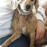 Adopt A Pet :: Mocha - Hamilton, ON