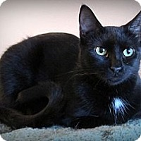 Adopt A Pet :: Zephyr - Seminole, FL