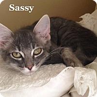Adopt A Pet :: Sassy - Bentonville, AR