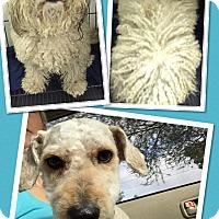 Adopt A Pet :: Lloyd - Scottsdale, AZ
