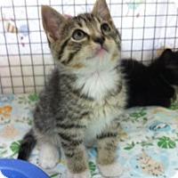 Adopt A Pet :: Sunoco - Bensalem, PA