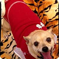 Adopt A Pet :: Sadie - Johnson City, TX