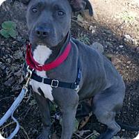 Adopt A Pet :: Mia - Framingham, MA