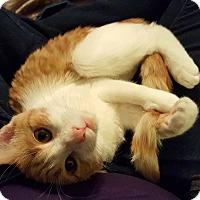 Adopt A Pet :: Michone - Tega Cay, SC
