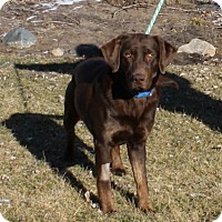 Adopt A Pet :: Riley - Lewisville, IN