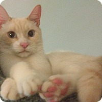 Adopt A Pet :: TNT - Whitestone, NY