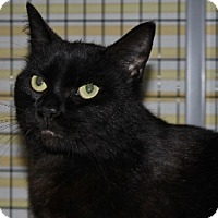 Adopt A Pet :: Merlin - Grants Pass, OR