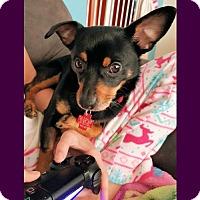 Adopt A Pet :: Congo 8 pounds! - Genoa City, WI
