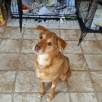 Adopt A Pet :: Hazel - Richmond, VA