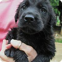 Adopt A Pet :: Bree - Brookside, NJ
