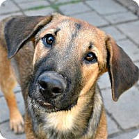 Adopt A Pet :: Clyde - Sunnyvale, CA