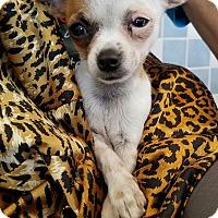 Adopt A Pet :: Randy - San Diego, CA