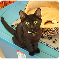 Adopt A Pet :: Jett - Welland, ON