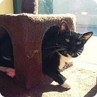 Adopt A Pet :: Lily (Fancy) - Leonardtown, MD