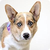 Adopt A Pet :: Kippy D161615: PENDING ADOPTION - Edina, MN