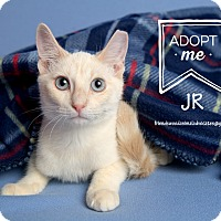 Adopt A Pet :: JR - Friendswood, TX
