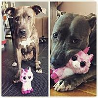 Adopt A Pet :: Dulce - Brooklyn, NY