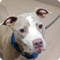 Adopt A Pet :: Jingles - Saginaw, MI