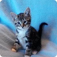 Adopt A Pet :: Cherry - Templeton, MA