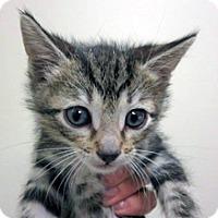 Adopt A Pet :: Vicky - Wildomar, CA