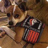 Adopt A Pet :: Naomi - Tijeras, NM