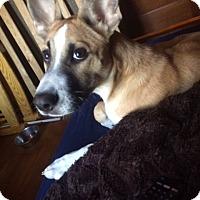Adopt A Pet :: Gibbs - Plainfield, CT