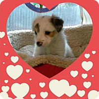 Adopt A Pet :: Valentine Litter: Sweet Pea - Akron, OH