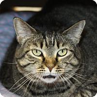 Adopt A Pet :: Trixie - Sarasota, FL