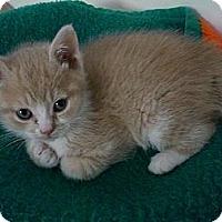 Adopt A Pet :: Darcie - Byron Center, MI