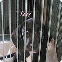 Adopt A Pet :: Izzy - Linden, TN