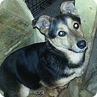 Adopt A Pet :: Monte - Chicago, IL