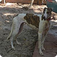 Adopt A Pet :: Cosey - Pearl River, LA
