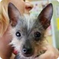 Adopt A Pet :: Chewy (fostered in IL) - Gilford, NH