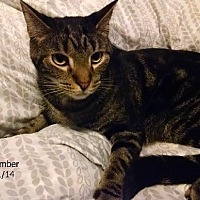Adopt A Pet :: Timber - Plain City, OH